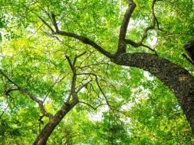 Journée internationale des Forêts - La Ferme du Parcot