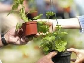 Troc aux plantes et vide-jardin