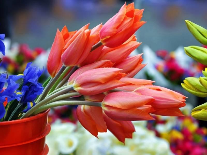Floralies  -Vide Grenier