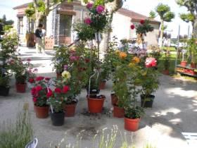 24ème marché aux fleurs
