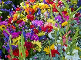 agenda Dordogne Randonnée et troc aux plantes