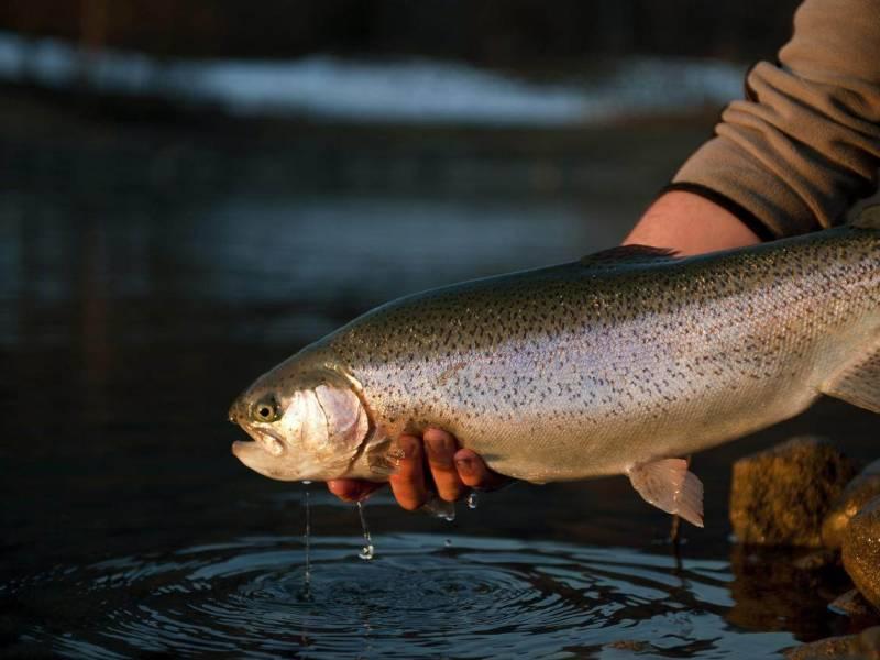 Concours de pêche annuel