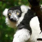 Calviac Zoological Reserve