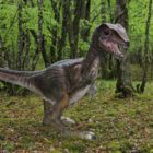 Le Conquil dinosaure