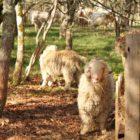 élevage mohair ferme des 4 vents dordogne