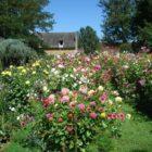 Dahlias Eyrignac et ses Jardins