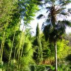 jardins de planbuisson