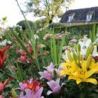 Lys Eyrignac et ses Jardins