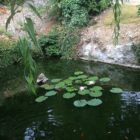 Gîte les combes étang